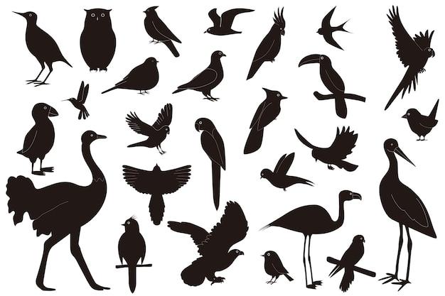 Insieme di uccelli di diverse specie, isolati su sfondo bianco Vettore Premium
