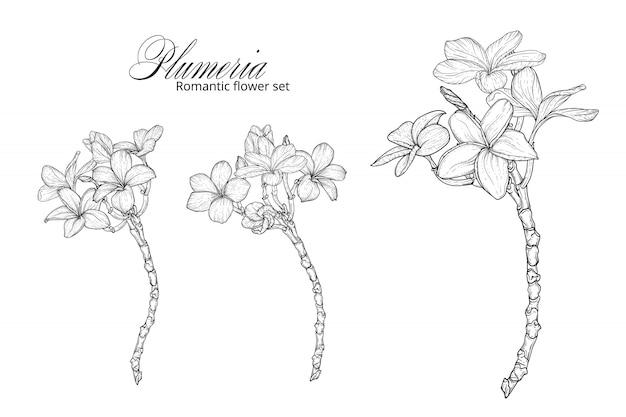 Un insieme di fiori bianchi e neri di plumeria. Vettore Premium