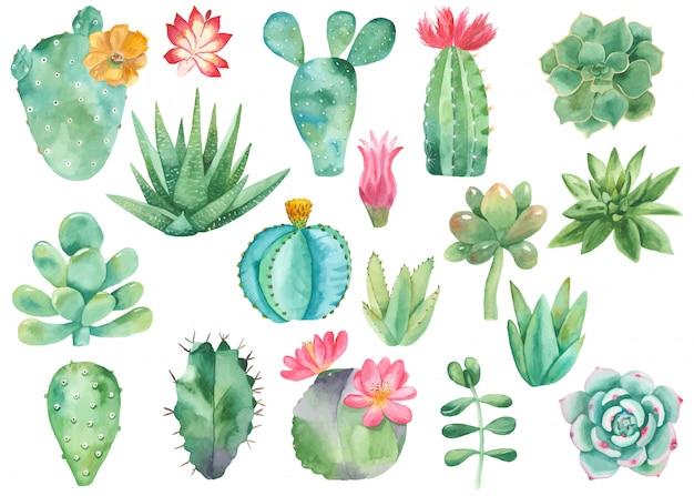 Impostare clipart di cactus Vettore Premium