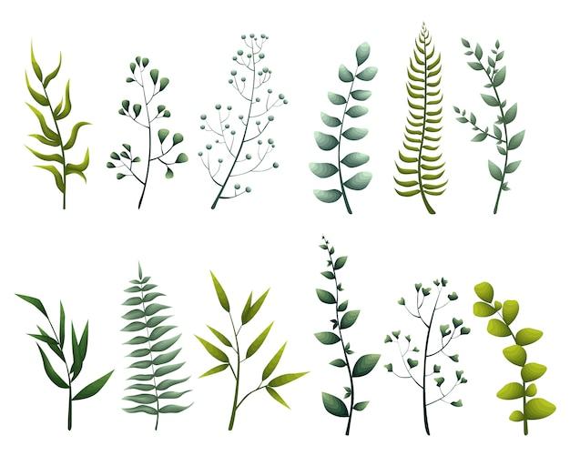 Impostare raccolta foglie verdi erbe stile acquerello Vettore Premium