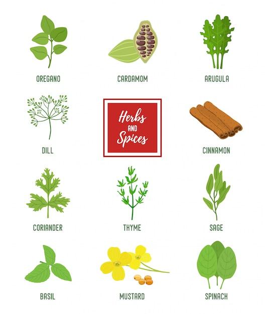 Set di condimenti, erbe vegetariane, piante profumate biologiche Vettore Premium