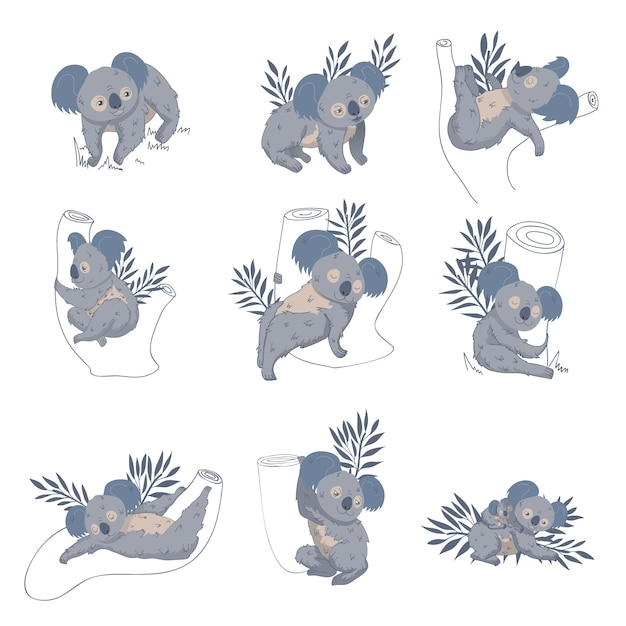 Set di simpatici koala su eucalipti e rami. animale marsupiale australiano. simpatiche creature selvagge Vettore Premium