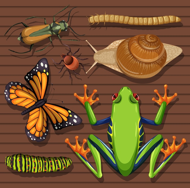 Insieme di diversi insetti su sfondo di carta da parati in legno Vettore Premium