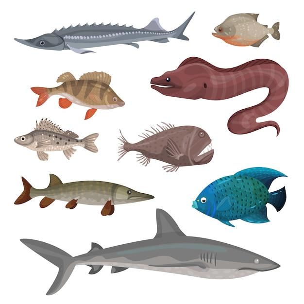 Insieme di diversi pesci predatori. creature marine. tema di vita di mare e oceano Vettore Premium
