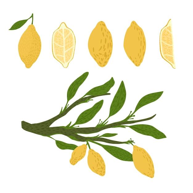 Set da limone, ramoscelli con fogliame su sfondo bianco. schizzo botanico astratto disegnato a mano in stile doodle. Vettore Premium