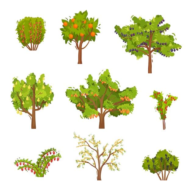 Insieme di alberi da frutto e cespugli di bacche. piante agricole. cibo naturale. tema giardinaggio Vettore Premium