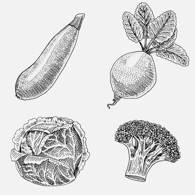Insieme di verdure disegnate a mano, incise, cibo vegetariano, piante, zucchine dall'aspetto vintage, broccoli e barbabietole, cavolo. Vettore Premium