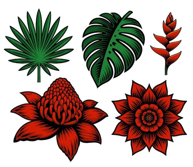 Set di illustrazione di piante e fiori tropicali Vettore Premium