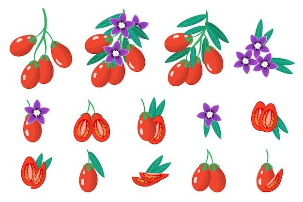 Insieme delle illustrazioni con frutti esotici di goji, fiori e foglie isolati Vettore Premium
