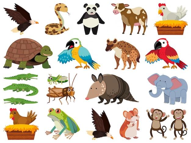 Insieme di animali selvatici di tema oggetti isolati Vettore Premium