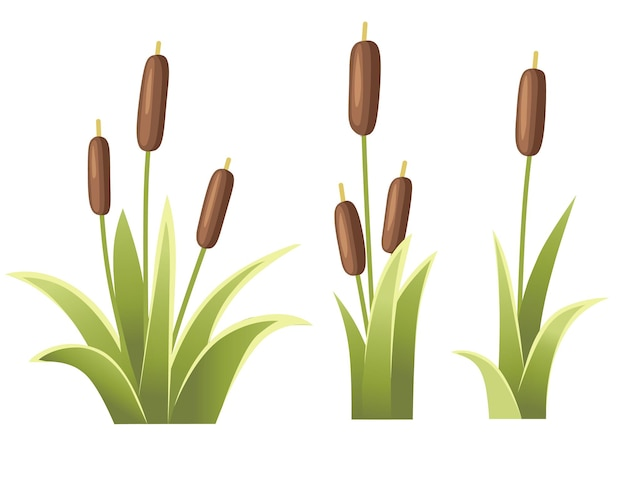 Set di canne in erba verde reed pianta palude verde erba di canna illustrazione Vettore Premium