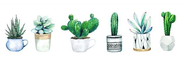 Set di sei piante di cactus e piante grasse in vaso, disegnati a mano Vettore Premium