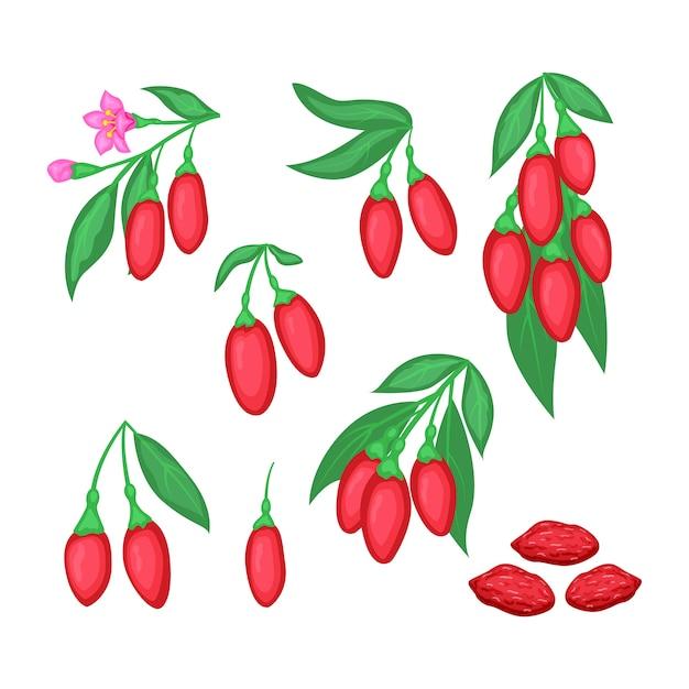 Set di superfood detox bacche di goji ramo con fiori e frutta secca. illystration a bacca rossa isolato su sfondo bianco. Vettore Premium