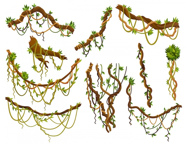 Set di rami di liane selvatiche contorte. piante di vite della giungla. flora della foresta pluviale e botanica esotica Vettore Premium