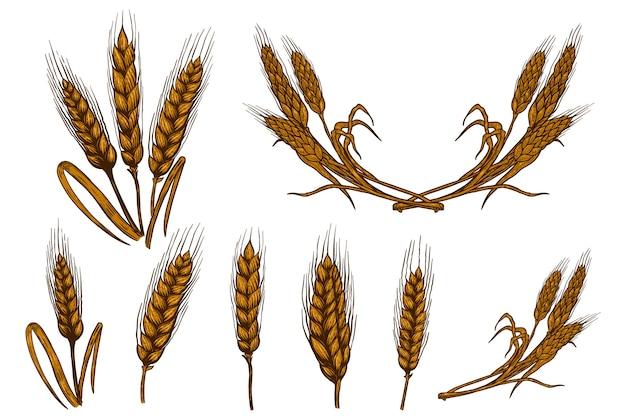 Insieme delle illustrazioni di spighetta di grano isolato su priorità bassa bianca. elemento di design per poster, carta, emblema, segno, carta, banner. immagine Vettore Premium