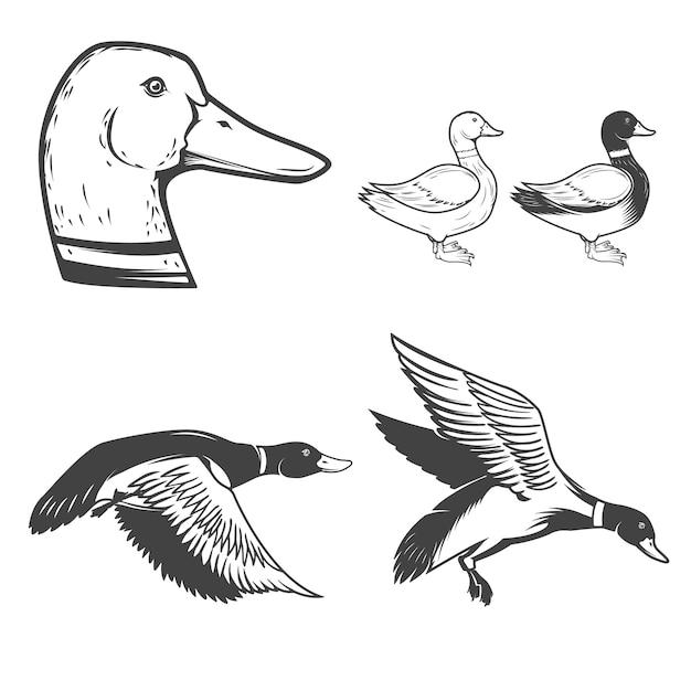 Insieme delle icone delle anatre selvatiche su fondo bianco. caccia all'anatra elementi per logo, etichetta, badge, segno. illustrazione Vettore Premium