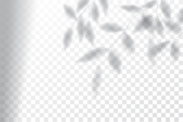 Ombra, effetti di sovrapposizione manichino, cornice della finestra e foglia di piante Vettore Premium