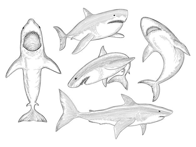 Disegnato a mano di squalo creatura acquatica che scorre grande mostro pesce con raccolta schizzo bocca Vettore Premium
