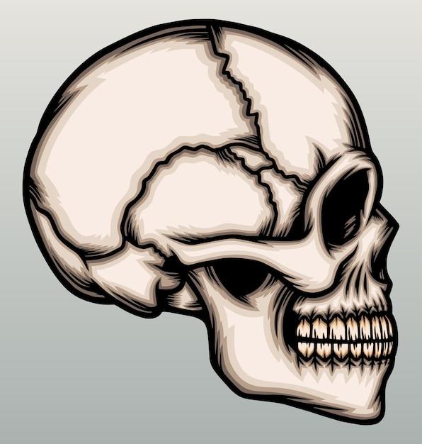 Lato della testa del cranio umano. Vettore Premium