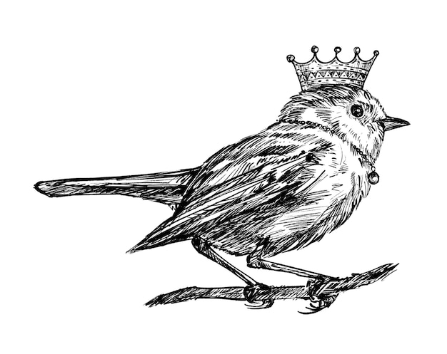 Schizzo del tiraggio della mano dell'uccello della corona Vettore Premium