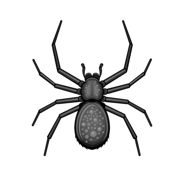 Spider aracnide nero su sfondo bianco. Vettore Premium