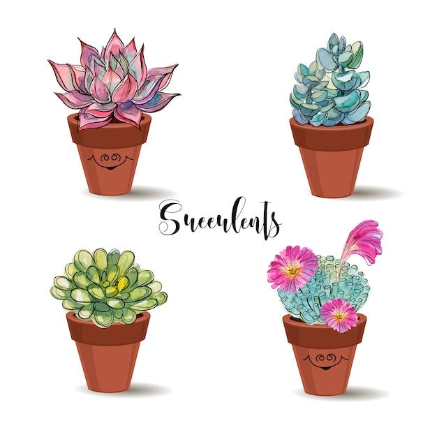 Succulente in vasi di terracotta Vettore Premium