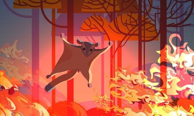 Aliante di zucchero in fuga dagli incendi in australia animali che muoiono in incendi boschivi disastro naturale concetto arancione intenso fiamme orizzontali Vettore Premium