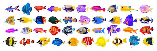 Icona del fumetto di pesci tropicali. animali isolati dell'acquario dell'icona del fumetto pesce tropicale dell'illustrazione di vettore su fondo bianco. Vettore Premium