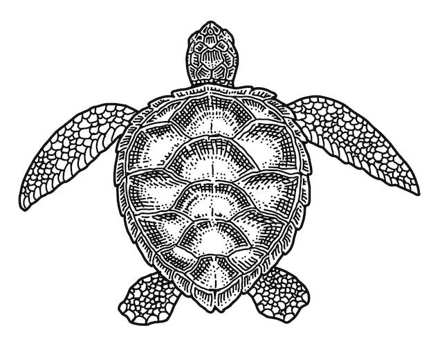 Tartaruga, illustrazione disegnata a mano di vettore di scarabocchio. Vettore Premium