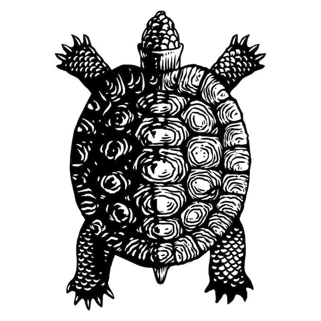 Illustrazione dell'incisione della tartaruga della tartaruga Vettore Premium
