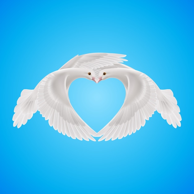 Due colombe bianche formano la forma del cuore Vettore Premium