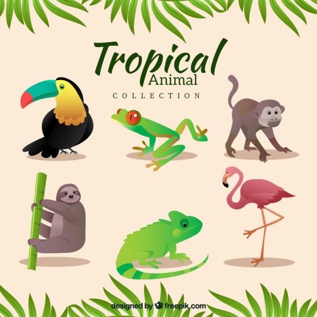 Varietà di animali tropicali Vettore Premium