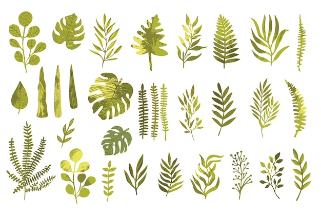 Insieme di elementi di design di vettore di felce foresta verde, verde tropicale eucalipto verde arte fogliame foglie naturali erbe in stile acquerello. Vettore Premium
