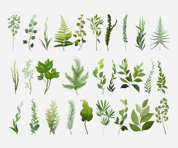 Insieme di elementi di design vettoriali collezione di felce foresta verde. Vettore Premium