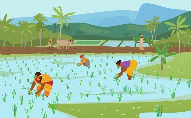 Illustrazione vettoriale di campi di riso indiani con i lavoratori Vettore Premium