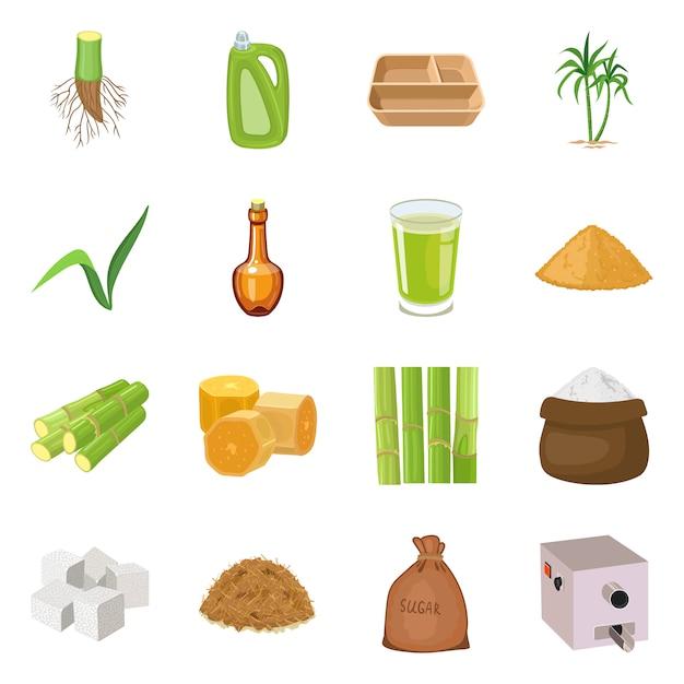 Illustrazione vettoriale di canna da zucchero e pianta logo. collezione di canna da zucchero e set di agricoltura Vettore Premium