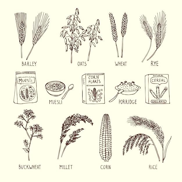 Insieme di vettore di diversi cereali. muesli, grano, riso e altri. Vettore Premium