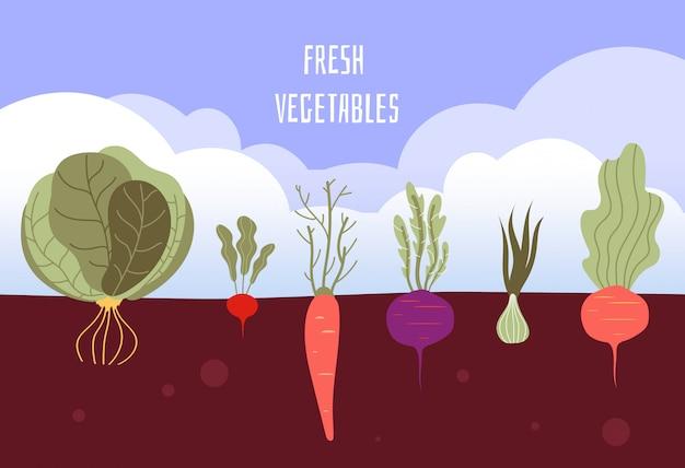 Orto. verdure organiche e sane dell'alimento che fanno il giardinaggio le verdure di estate con le radici nel fondo del suolo Vettore Premium