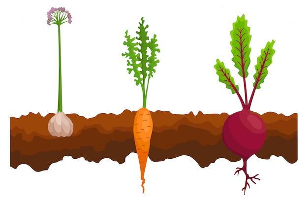 Verdure che crescono nel terreno. Vettore Premium
