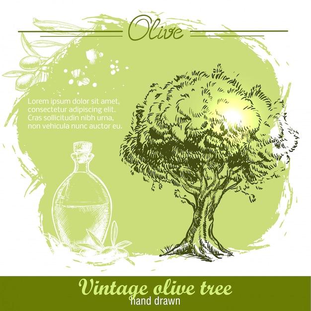 Vintage disegnati a mano olivo e olio d'oliva botle su acquerello Vettore Premium
