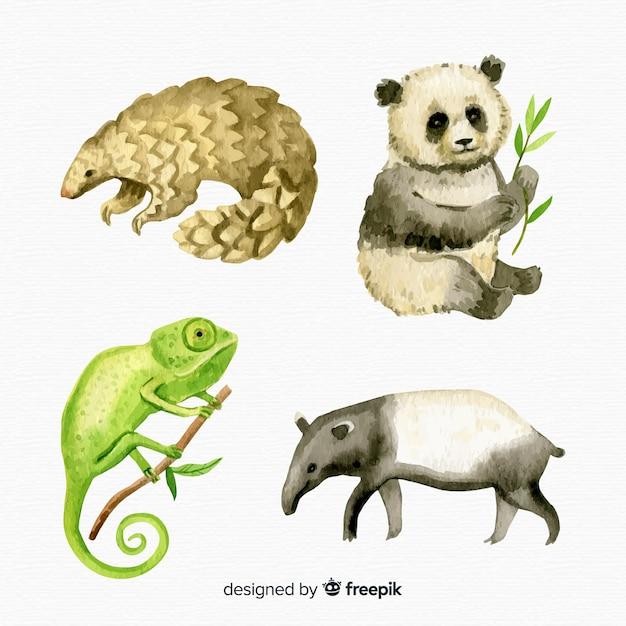Acquerello collezione di animali tropicali esotici Vettore Premium