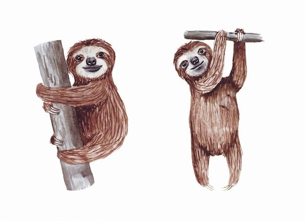 Bradipi svegli dipinti a mano dell'acquerello che appendono sull'albero. cartone animato piccolo animale bambino. Vettore Premium