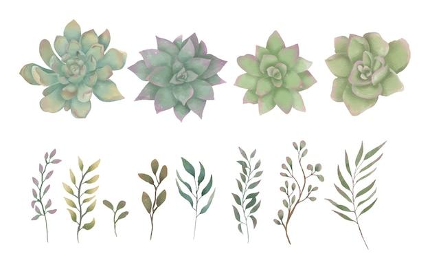 Collezione di elementi floreali di piante grasse dell'acquerello Vettore Premium