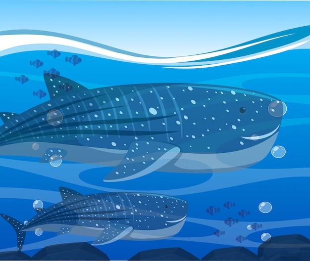 Squali balena e pesci sotto l'oceano Vettore Premium