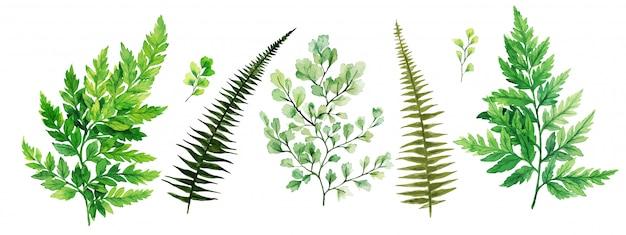 Flora, felci e adiantum selvatici, collezione verde brillante dell'acquerello Vettore Premium