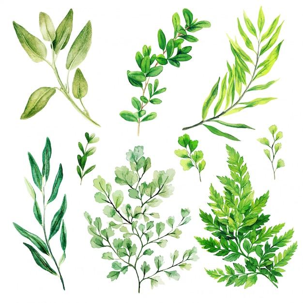 Foglie e felci selvatiche, verde brillante dell'acquerello Vettore Premium