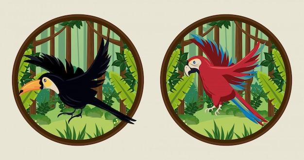 Tucano selvatico e uccelli pappagallo in cornici circolari Vettore Premium