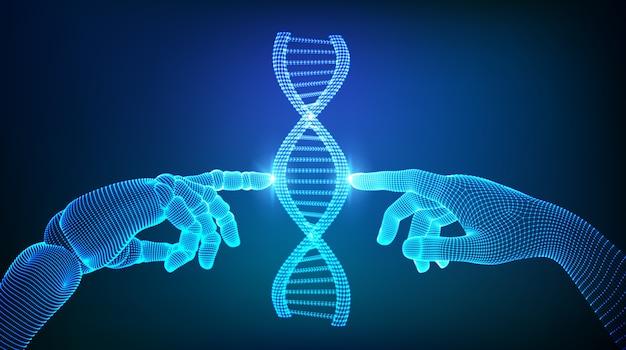 Wireframe dna sequenza molecole struttura mesh. mani di robot e umani che toccano il dna. Vettore Premium