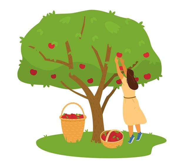 Coltivatore della donna che raccoglie il raccolto delle mele dall'albero di mele nell'illustrazione del canestro. Vettore Premium