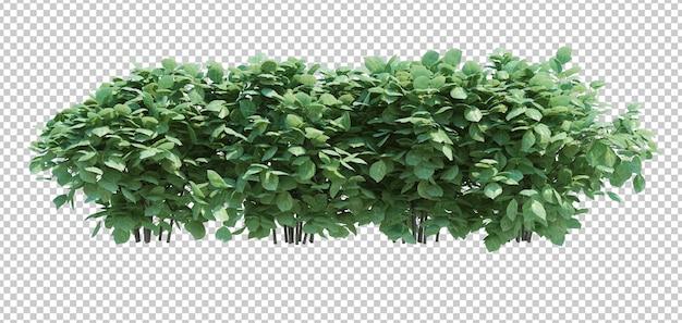 3d rendono l'albero della spazzola isolato su bianco Psd Premium